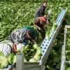Boeren eisen compensatie voor schade boycot