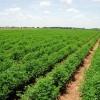 'Globalisering - risico's en kansen voor de Food and Finance wereld'
